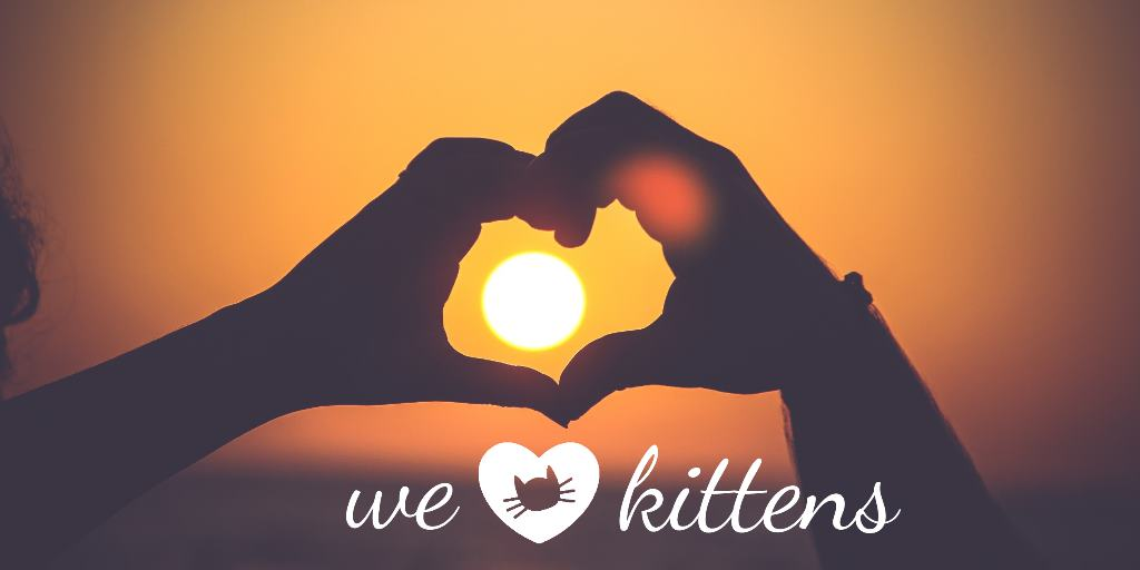 we love kittens